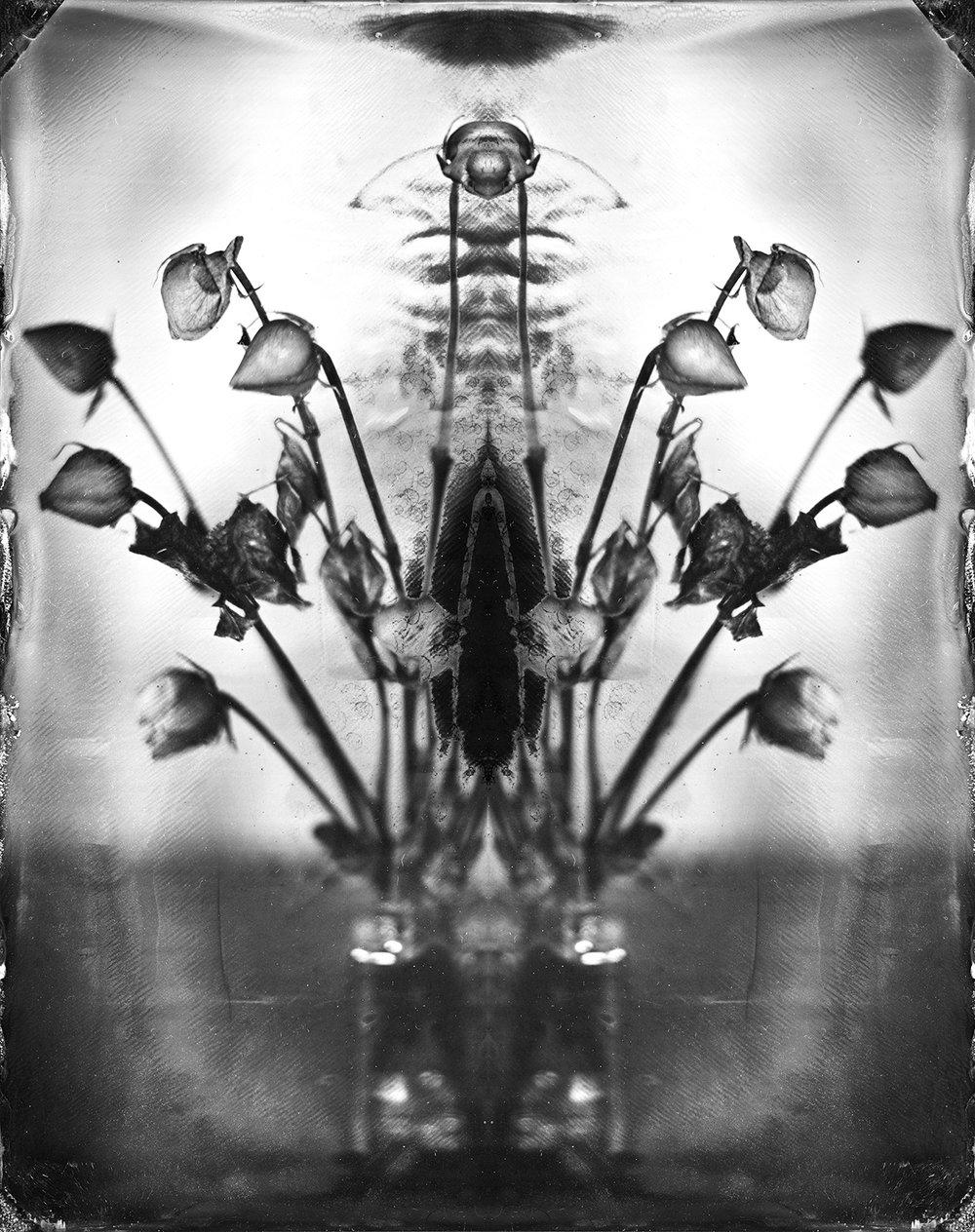 Satellite Roses