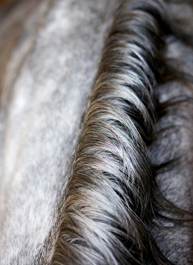 HorseMane_1.jpg