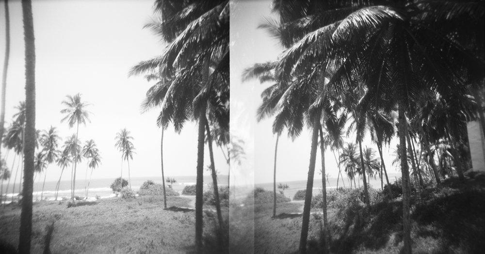 Palms_1.jpg