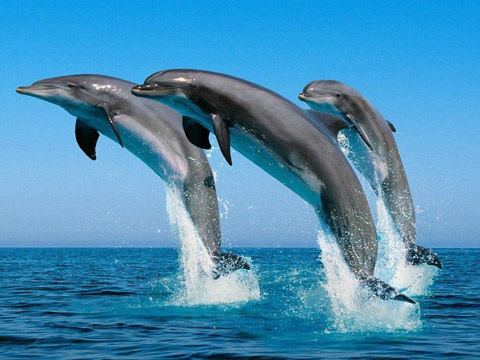 activities-dolphin2.jpg