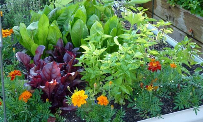 companion plants.jpg