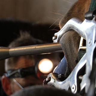 Tandbehandling   Rune Hjortkjær er meget erfaren indenfor tandbehandling og tandraspning af heste.