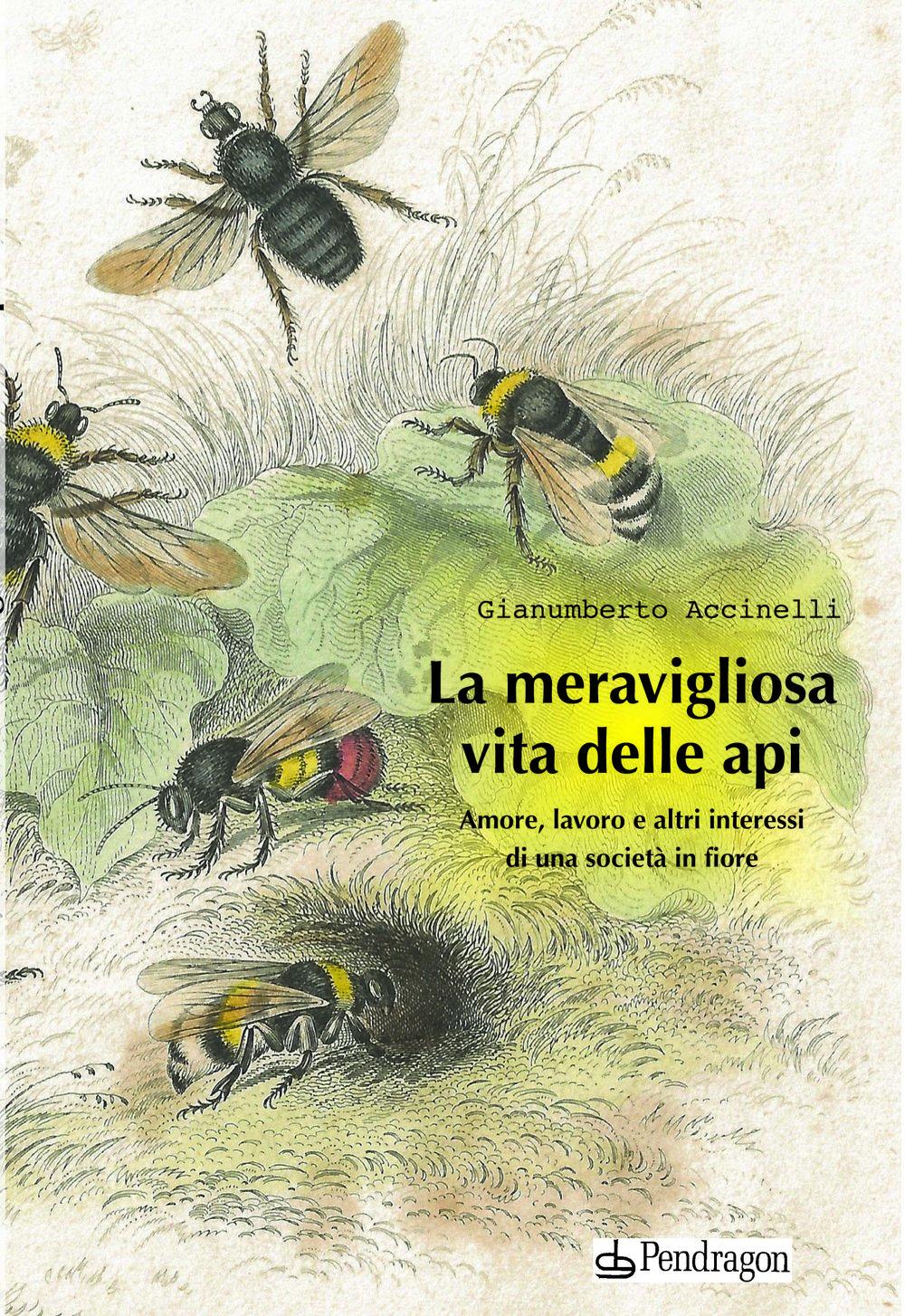 Cover-libro-Accinelli (1).jpg