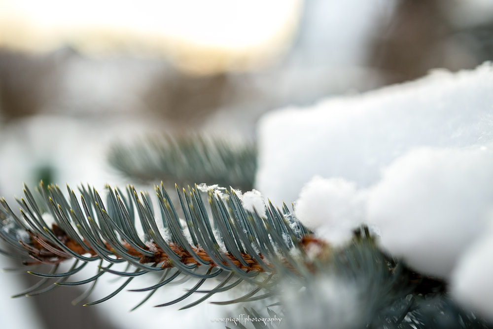 Winter-1010.jpg