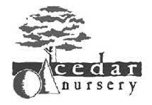 cedar nursery.jpg