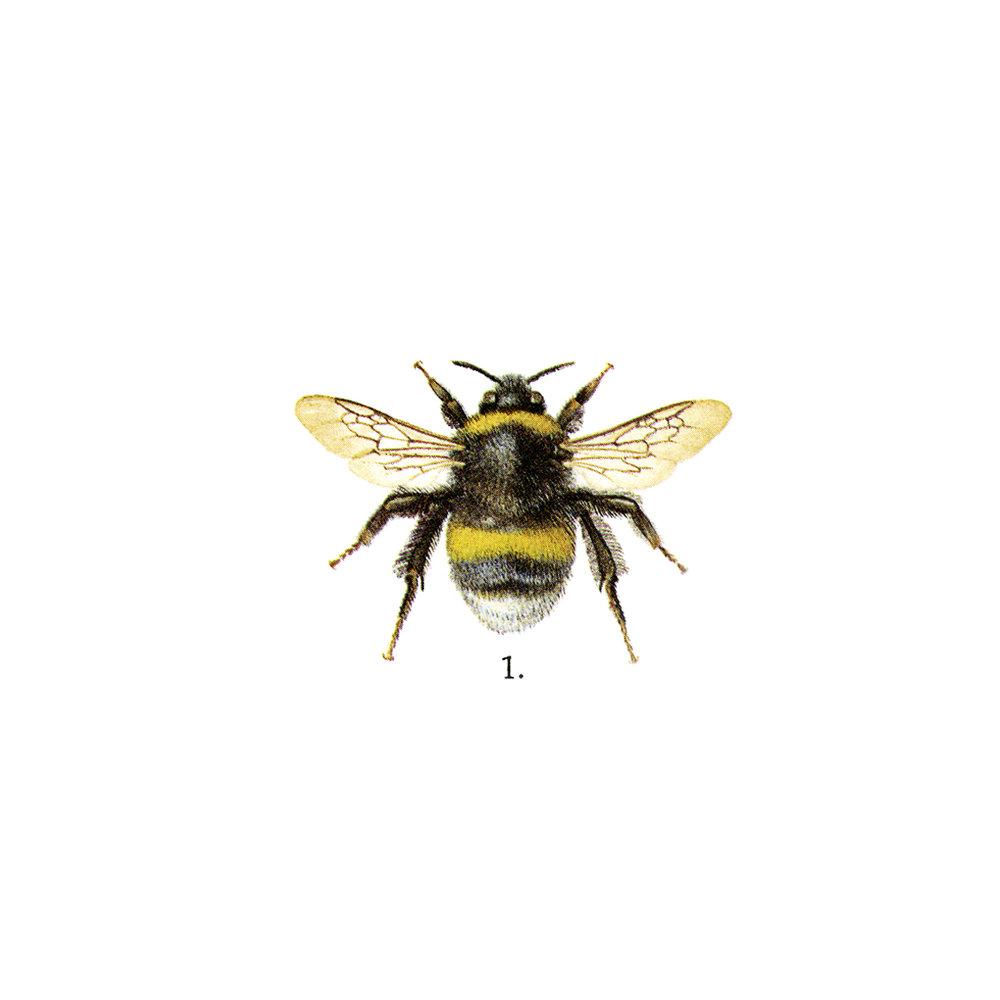 BEE 1-2.jpg