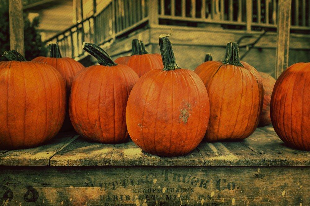 7Seeds Halloween Pumpkins