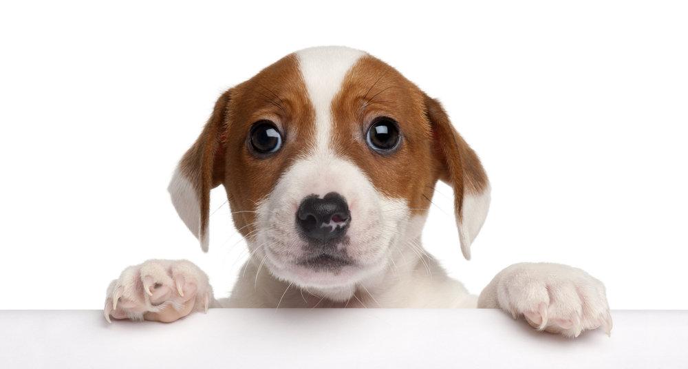 Please Don't Go! GDPR Dog.jpg
