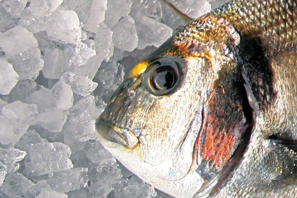 peixe1.jpg
