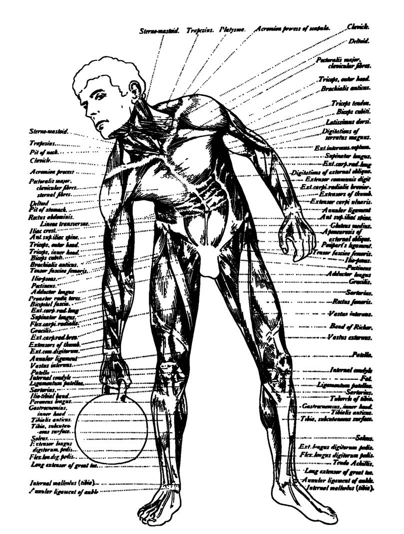 Fantastisch Anatomie Des Menschen Natürlich Online Kostenlos Ideen ...