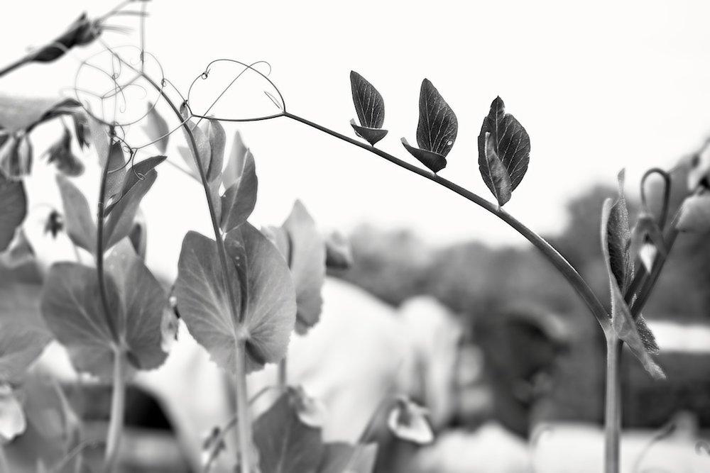 comunity-garden-09-701.jpg