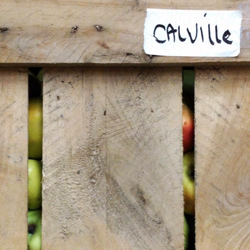 calville-scottfarm-square.png