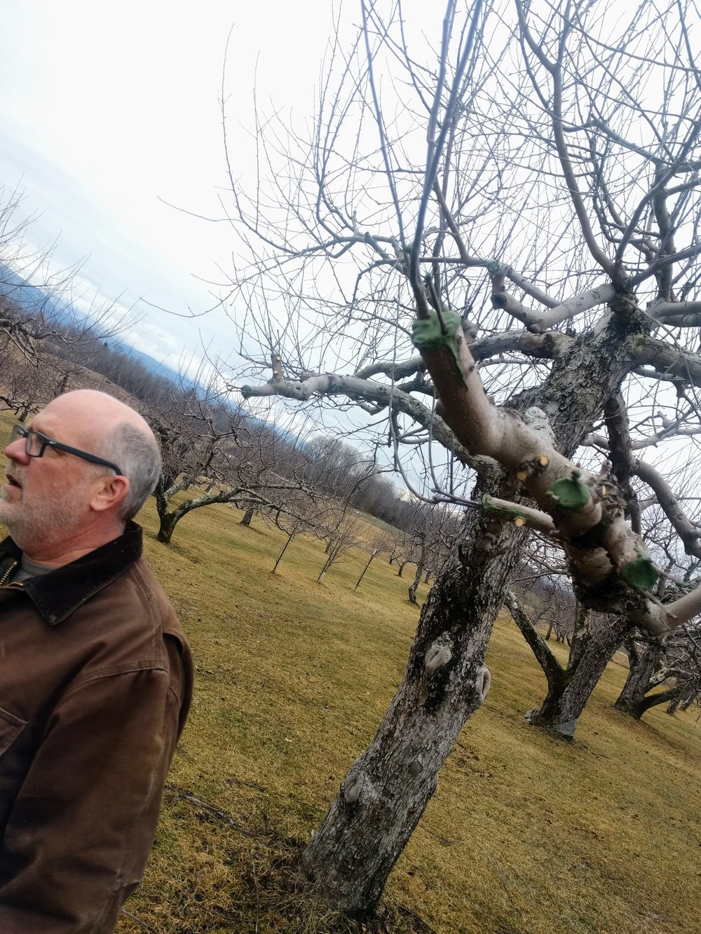 Brad Koehler, Orchardist and Cidermaker at Windfall Orchard, grows over fifty varieties of apples in his Cornwall, Vermont heritage orchard. The Koehlers will be opening a tasting room at Windfall Orchard in the Spring of 2017.