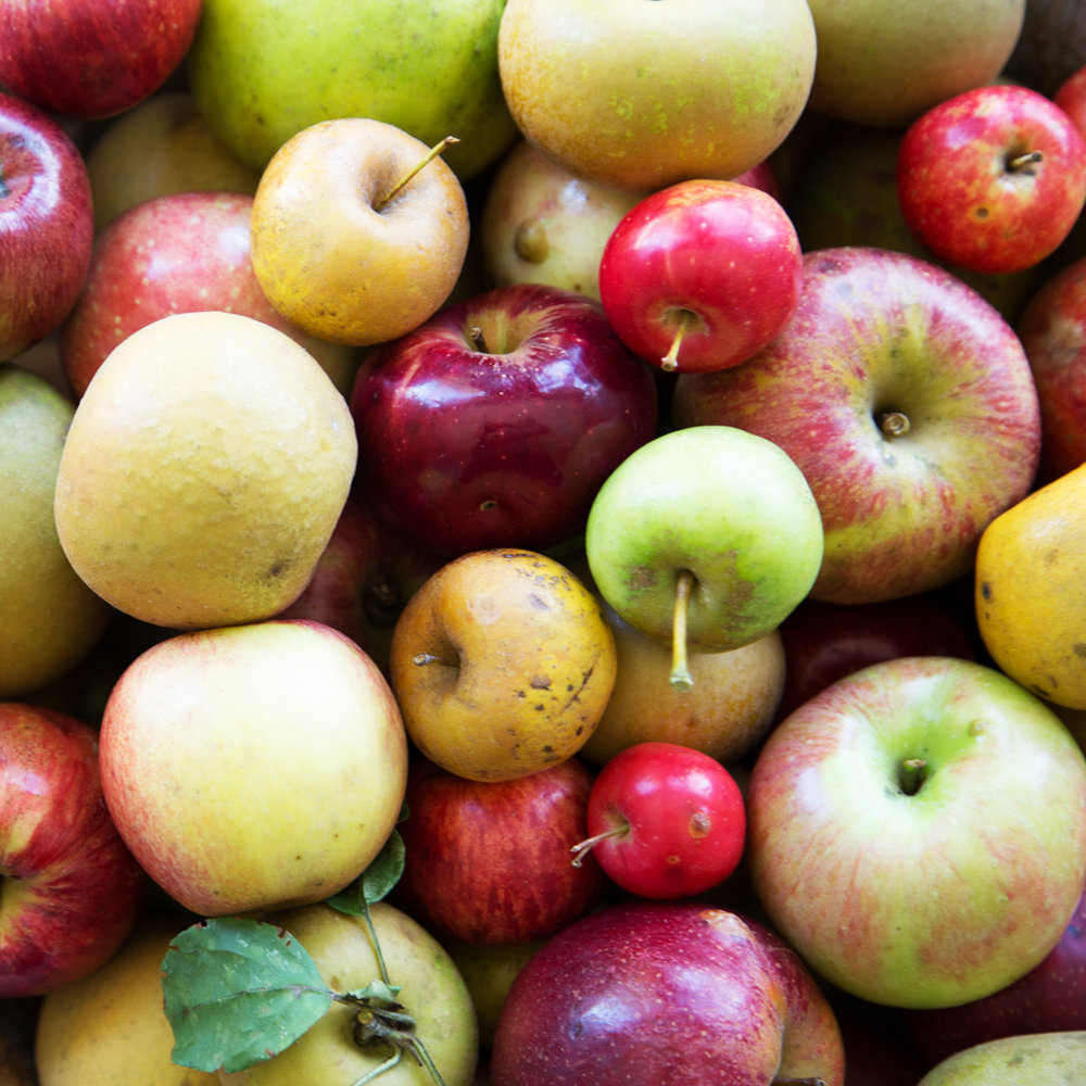 The Foggy Ridge orchards were planted with cider in mind, and boast an abundance of true cider apple fruit and heirloom varieties