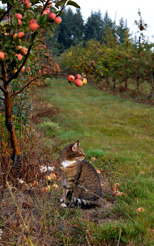 Opal the orchard cat keeps an eye on the crabs