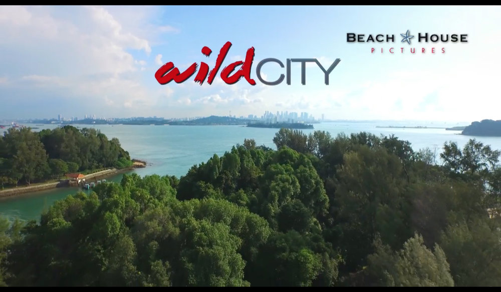 WildCityIslands