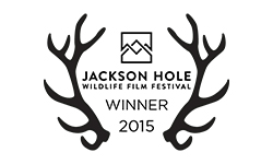 JacksonHoleWinner250x150.jpg