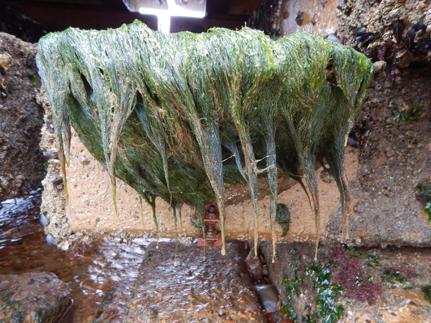 seaweedpool.png