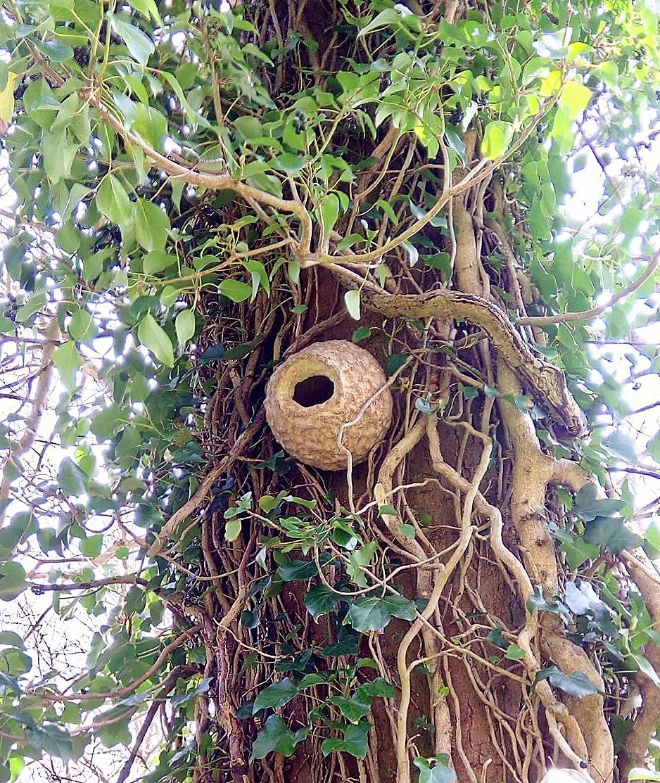 Artecology nest box installed in woods near Ventnor, Isle of Wight