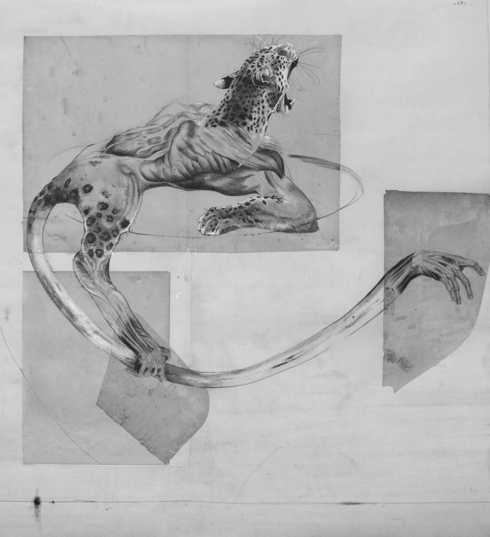 THE REMAINS OF DISAPPEARANCE #15; 2015; Acrylic on 18th century anatomical drawing/collage; 38.2 x 34.6 inches (97 x 88 cm)