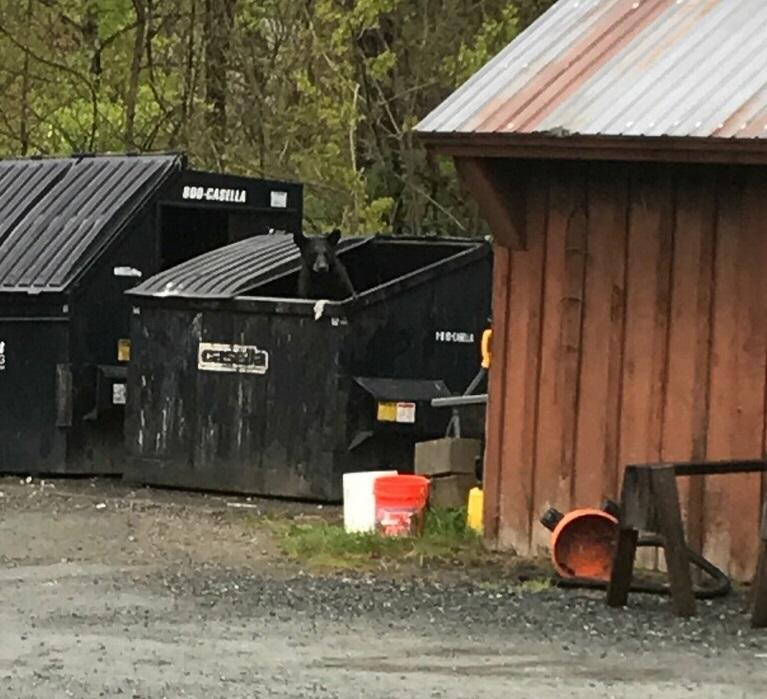NHPR: High-Stakes Week for Hanover's Rogue Bears Comes to a Hopeful Close    It's been a week of high-stakes ups-and-downs for four bears living in the Hanover area. A home break-in, traps set, and in the end, a last-minute reprieve by the governor.
