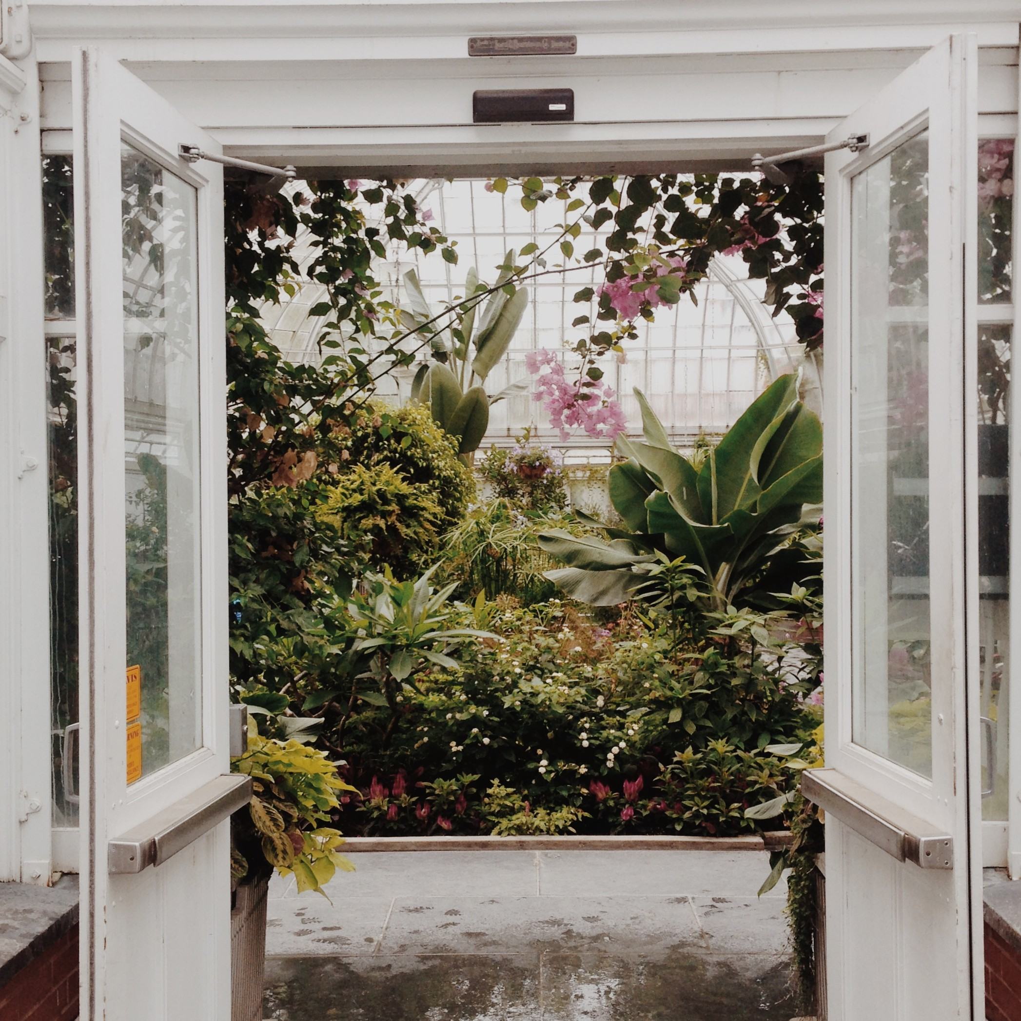 Entering paradiso — The Westmount Greenhouse