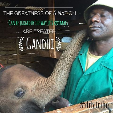 """The greatness of a Nation can be judged by the way its animals are treated"" - Ghandi #dswt (Image via @yogishelley)"