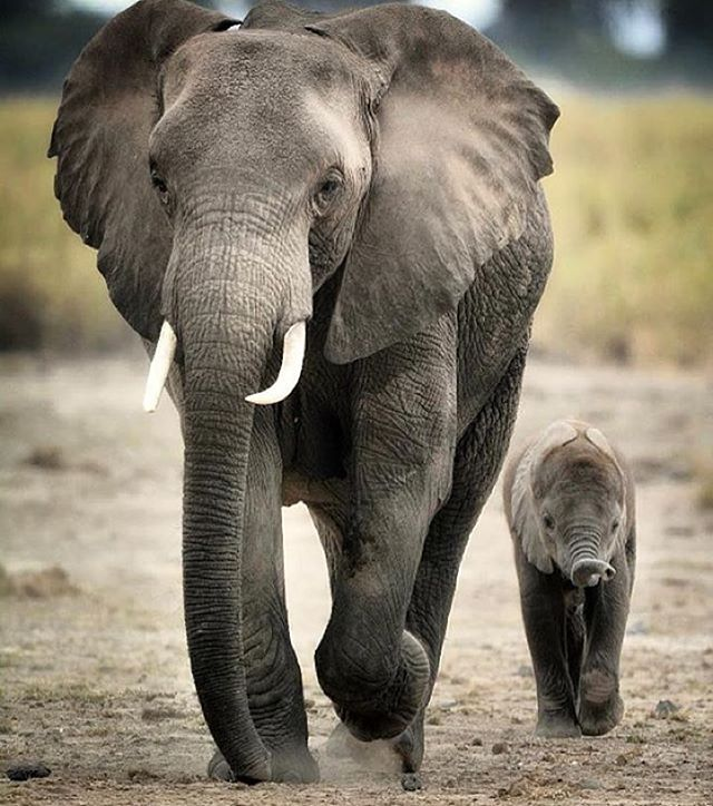 Never Loose Hope (Image via @loveone_project)  #hopeforelephants