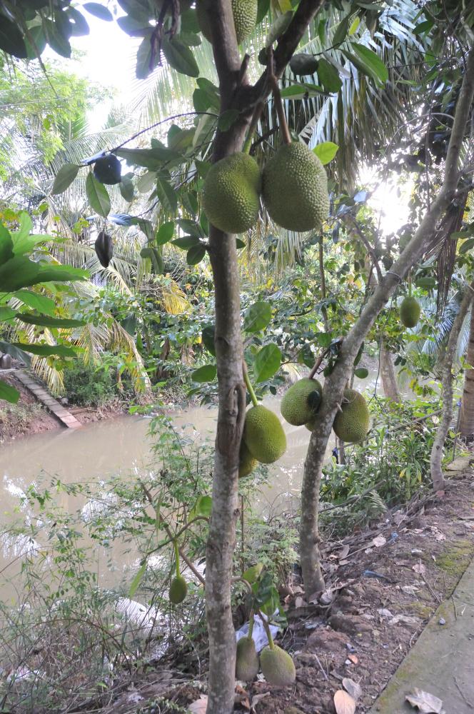 Jack fruit too.
