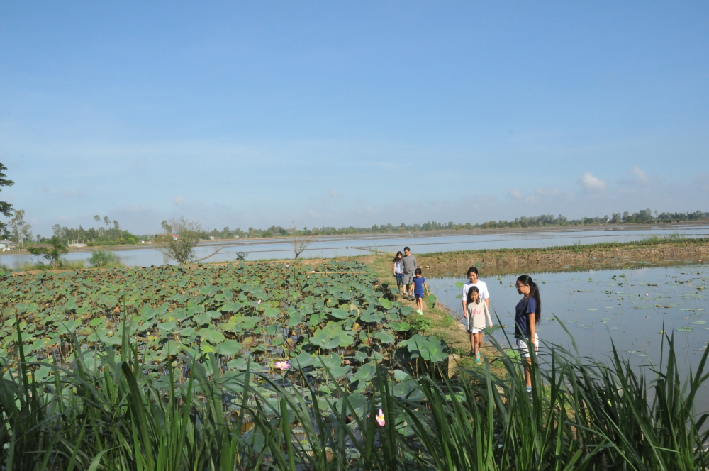 On our way home, we passed many lotus farms.