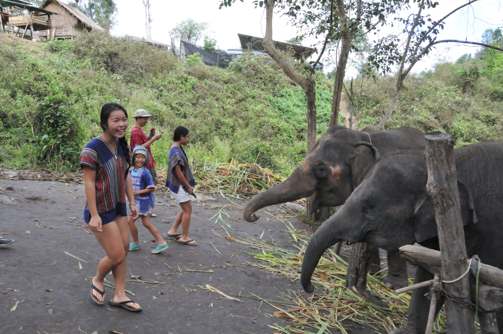 Mommy elephant on the left
