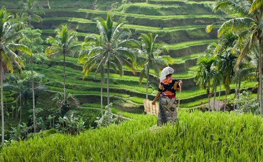 rice paddies eat play bali retreat 2018.jpg