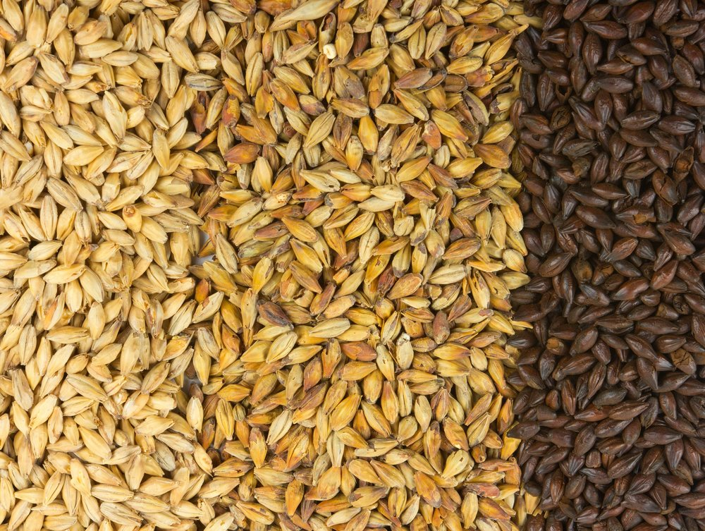 From left to right: two-row base malt, crystal specialty malt, and roasted malt.