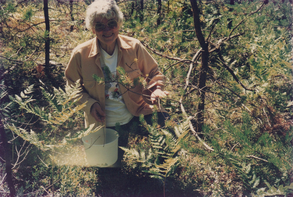 Jean Mehlenbacher foraging in the woods.