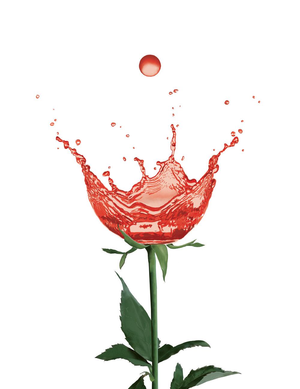 rosefinal.jpg