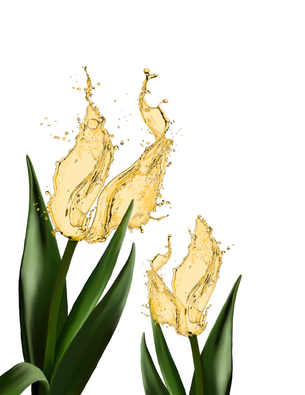 tulipsyellowv.png
