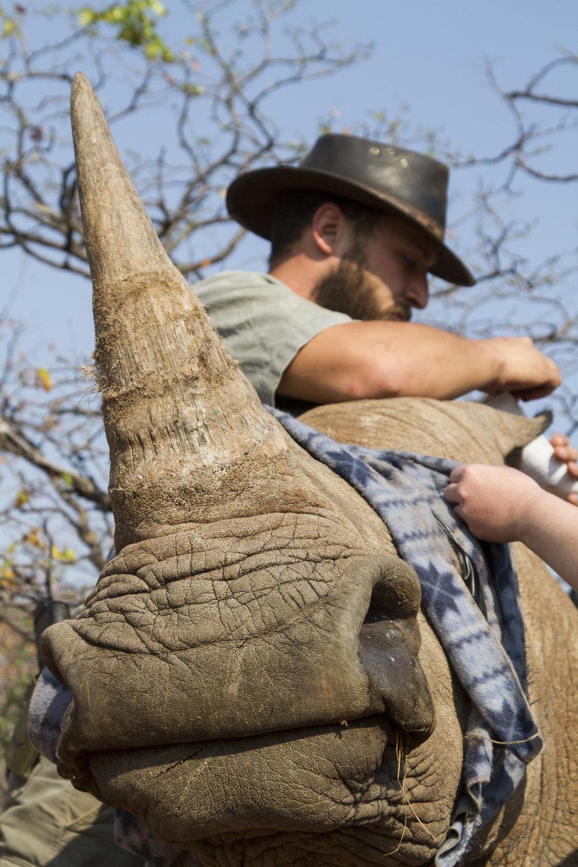 Internships Abroad: Wildlife Management Photo By Francois Meyer