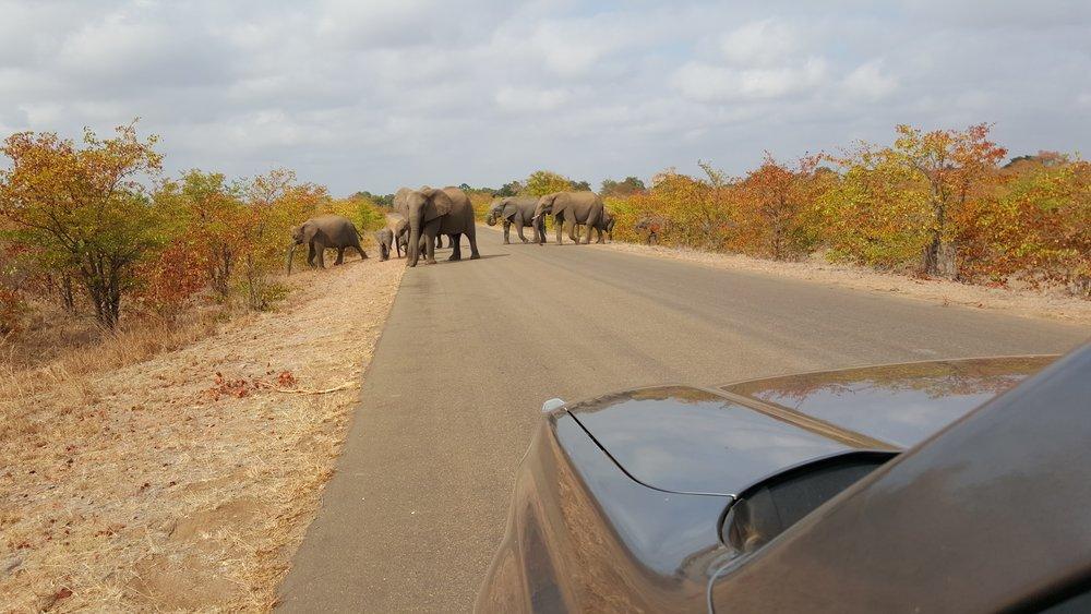 Elephants In the Road.jpg