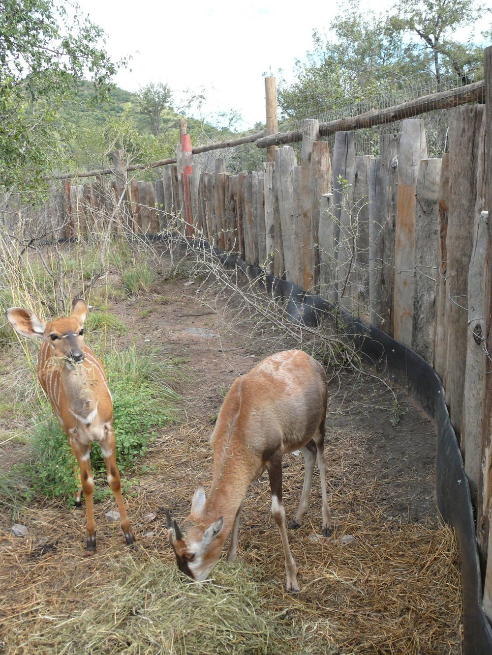Wilding Up Enclosure.jpg