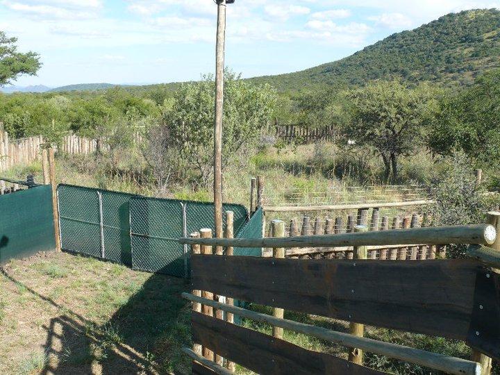 Rehab Wilding Up Enclosures.jpg