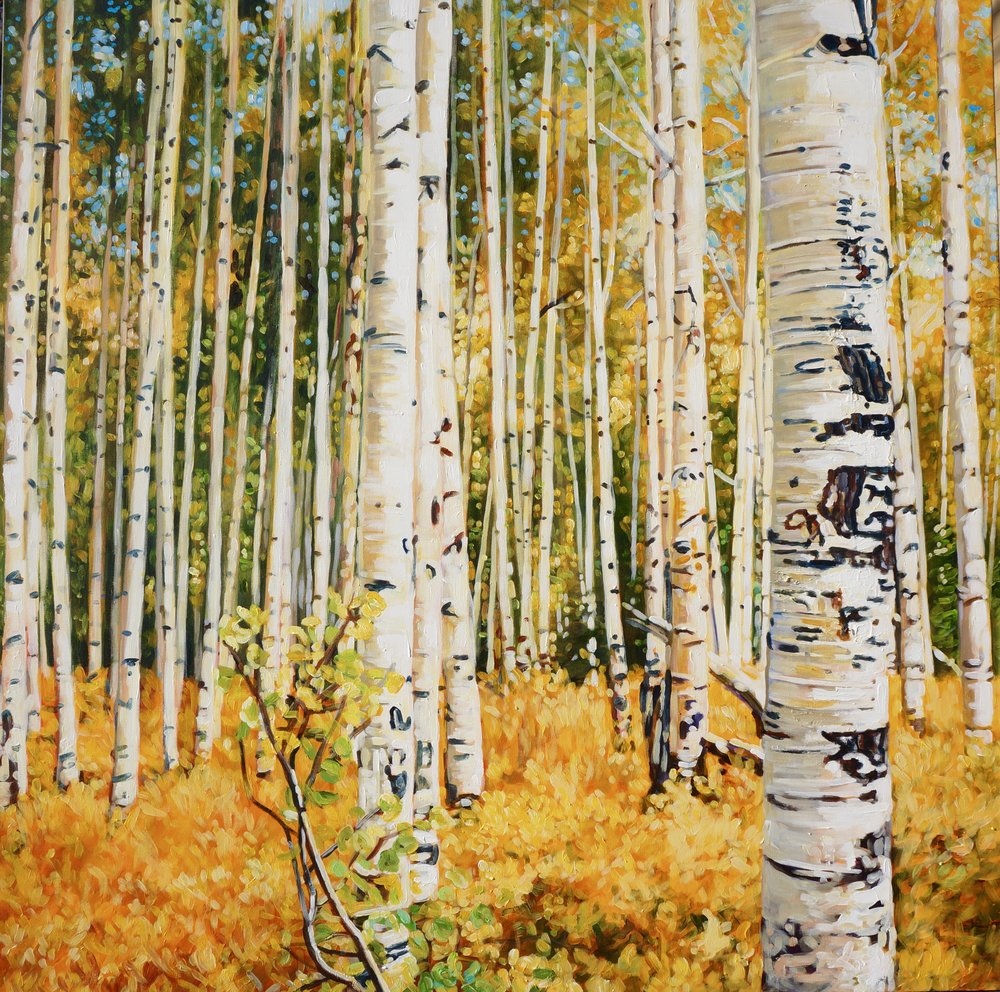 COLORADO ASPENS 48X48 IN $7800     GICLEE PRINTS AVAILABLE IN VARIES SIZES ON PAPER/CANVAS