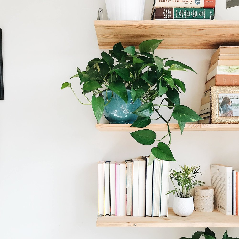 houseplants and books Michelle Martin Bookstagram.jpg