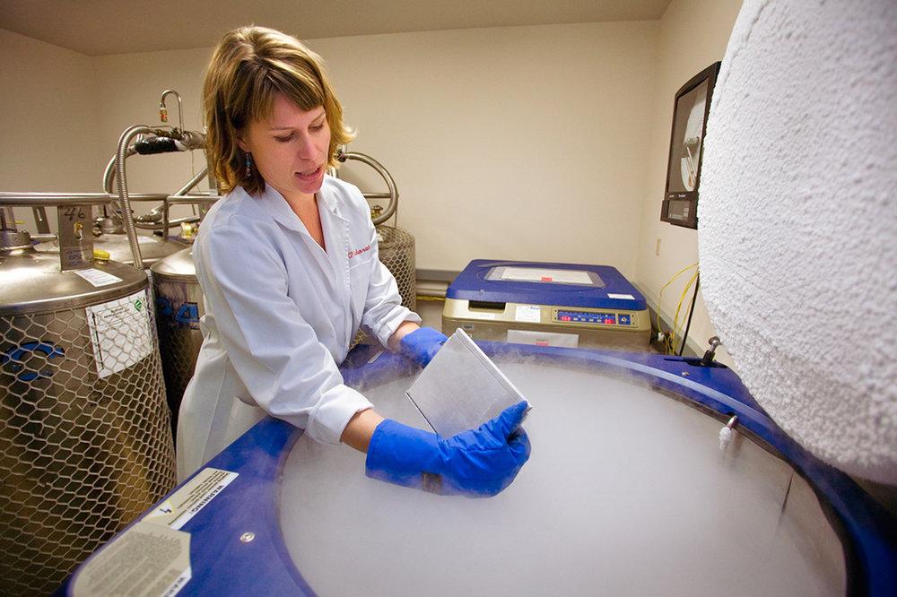 Cell Samples in Liquid Nitrogen