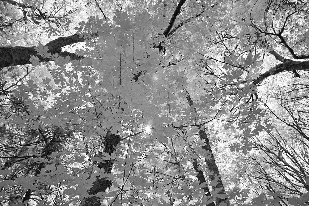 Tryon Creek State Natural Area, Portland, Oregon