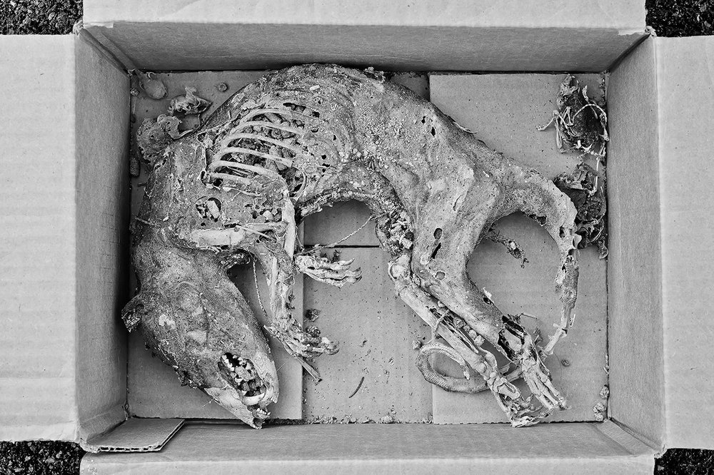 Box Of Mummified Possums, Hamilton, New York