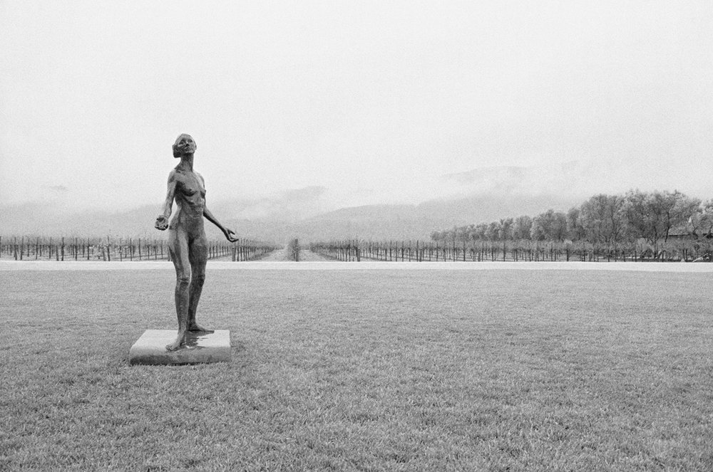 Woman In The Vineyards Robert Mondavi Winery, Napa Valley, California