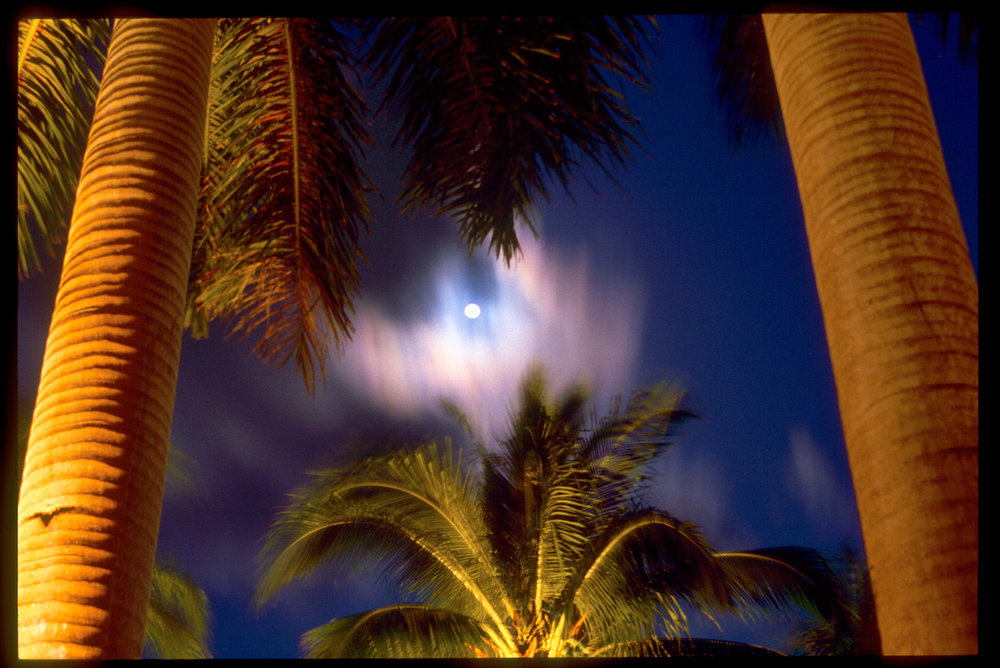 Palms, Moon and Sky, Grand Cayman, Cayman Islands