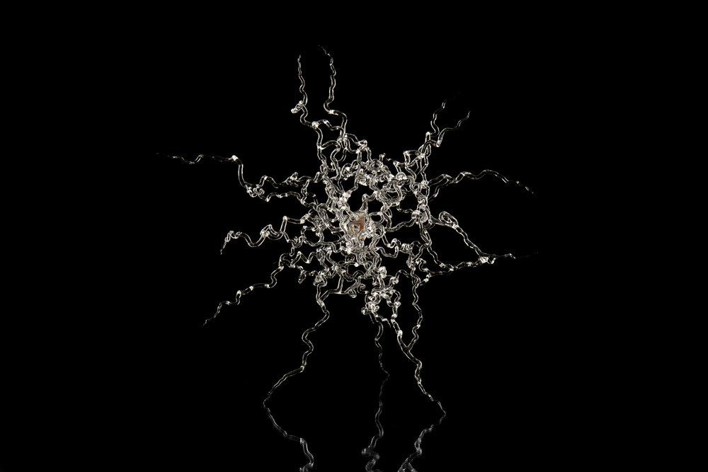 Neurogenesis II