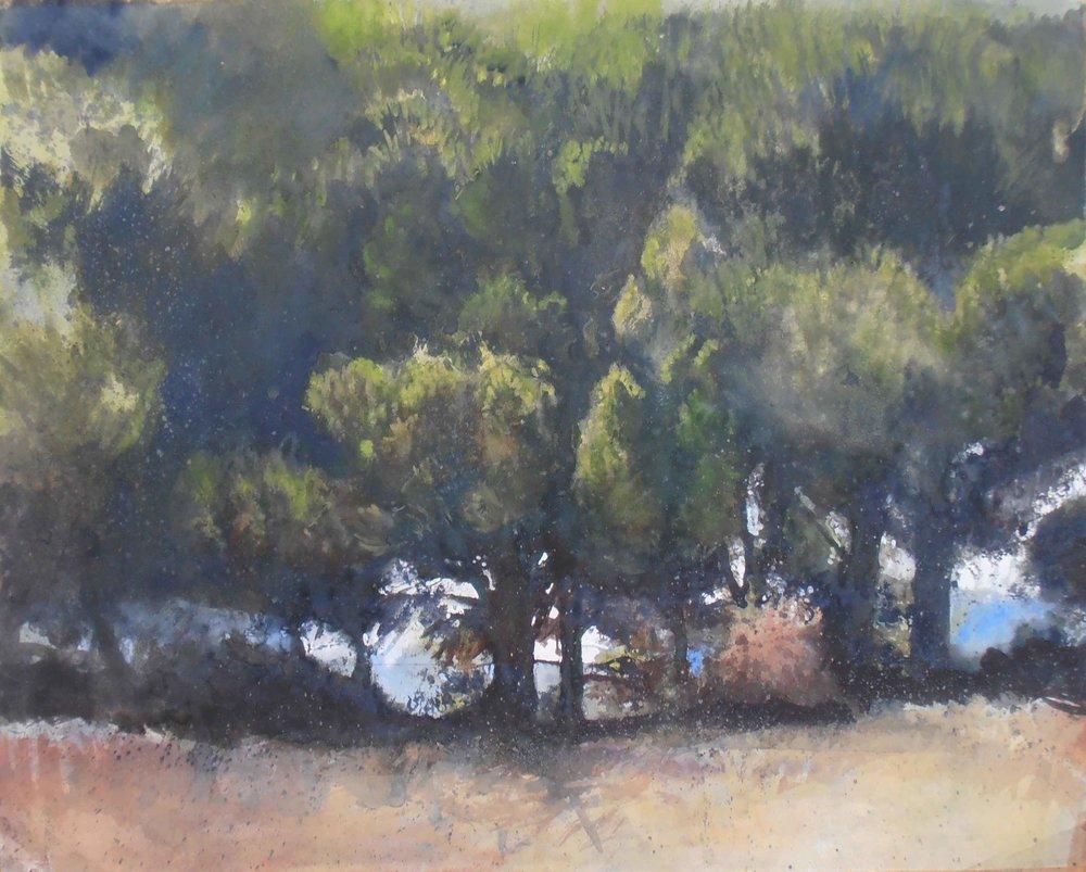 olive grove 2e.jpg