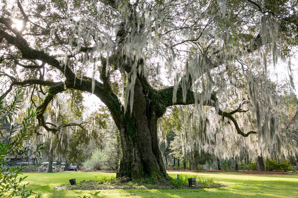 LisaDiederichPhotography_CondeNast_Charleston-45.jpg